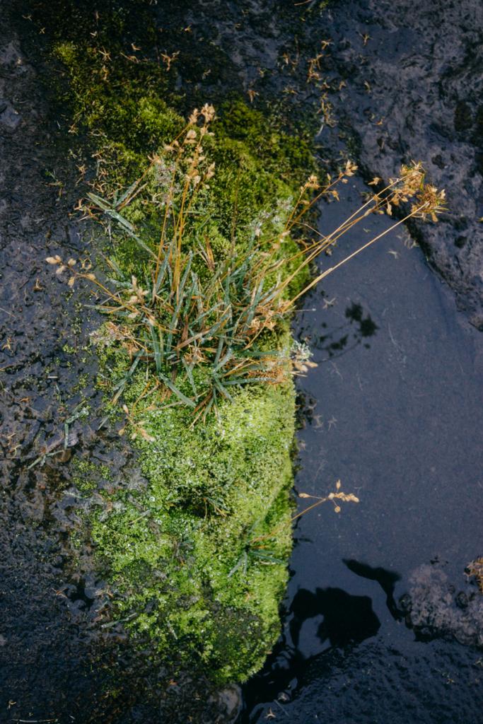Island Natur Selfoss