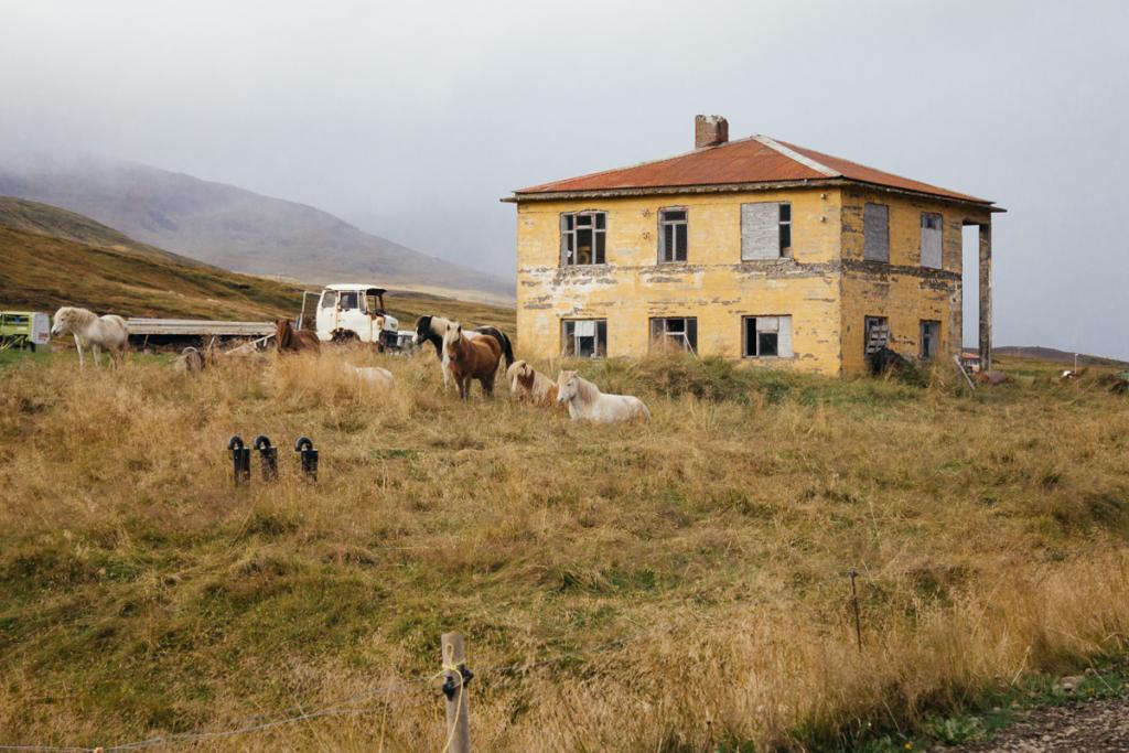 Pferde - Fahrt nach Bakkagerði Island