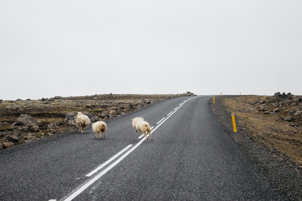 Schafe Island
