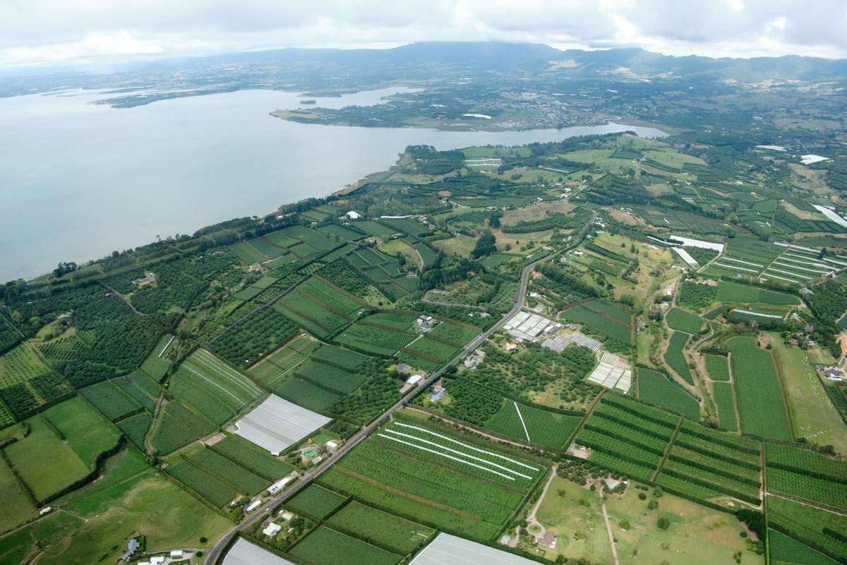 Orchards near Katikati